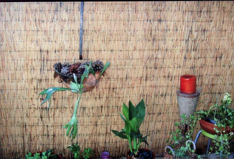 plantholder.jpg