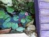 fishies2.jpg